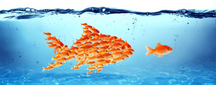 Social Media Marketing: groepen identificeren zich graag met hun grote voorbeeld